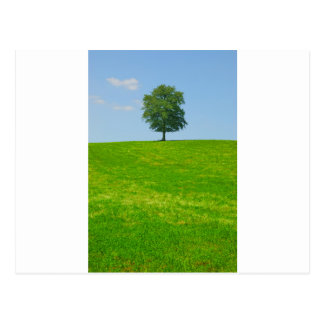 Tree in  a field postcard