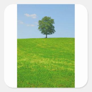 Tree in  a field square sticker