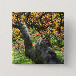 Tree in Autumn Photography 2 Inch Square Button
