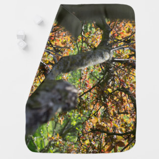 Tree in Autumn Photography Baby Blanket