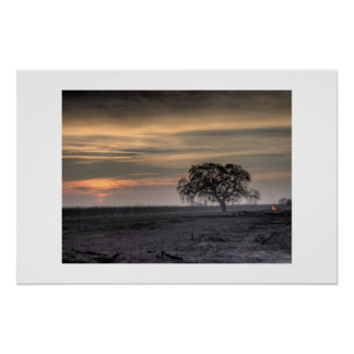 Tree in field at dusk poster