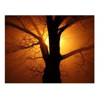 Tree In Fog At Night Postcard