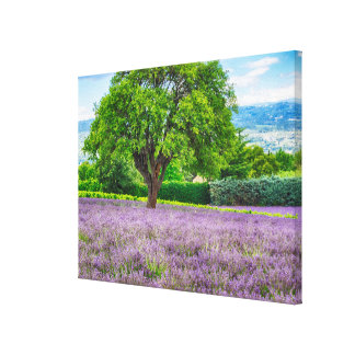 Tree in Lavender Field, France Canvas Print
