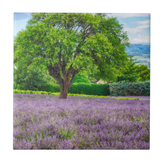 Tree in Lavender Field, France Ceramic Tiles