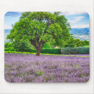 Tree in Lavender Field, France Mouse Pad