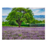 Tree in Lavender Field, France Poster