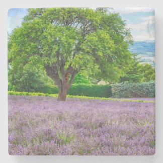 Tree in Lavender Field, France Stone Coaster