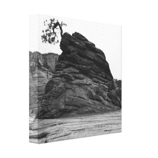 Tree in Rock at Zion Canvas Print