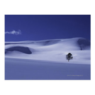 Tree in snowy hills, Yellowstone National Park, Postcard