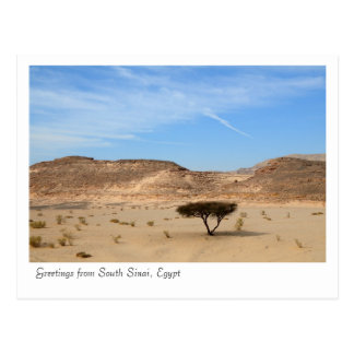 Tree in the desert, South Sinai, Egypt Postcard