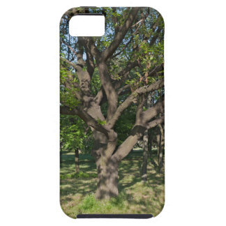 Tree in the springtime iPhone 5 covers