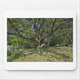 Tree in the springtime mouse pad
