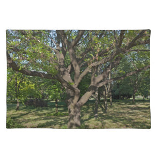 Tree in the springtime placemat