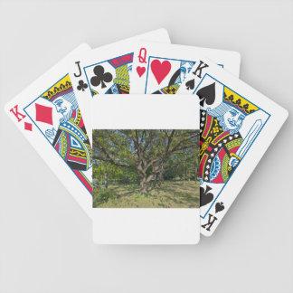 Tree in the springtime poker deck