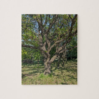 Tree in the springtime puzzles
