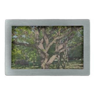 Tree in the springtime rectangular belt buckles