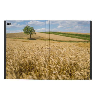 Tree In Wheat Field Landscape