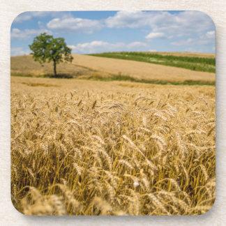 Tree In Wheat Field Landscape Coaster