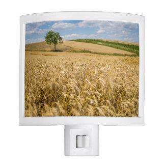 Tree In Wheat Field Landscape Nite Light