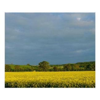 Tree in Yellow Field Art Photo