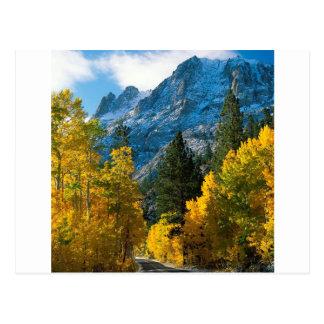 Tree June Lake California Postcard