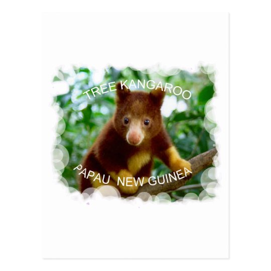 Tree kangaroo postcard