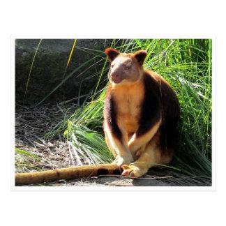 tree kangaroo postcard
