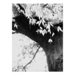 Tree l Still Nature l Photography Poster