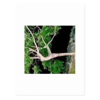tree lady postcard