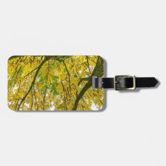 Tree leaves and branches from below in fall bag tag