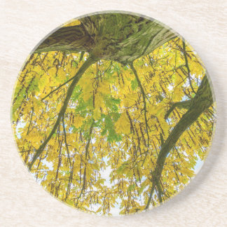 Tree leaves and branches from below in fall beverage coaster