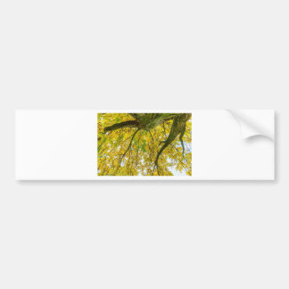 Tree leaves and branches from below in fall bumper sticker