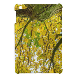Tree leaves and branches from below in fall cover for the iPad mini