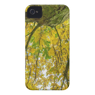 Tree leaves and branches from below in fall iPhone 4 cover