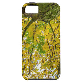 Tree leaves and branches from below in fall iPhone 5 case