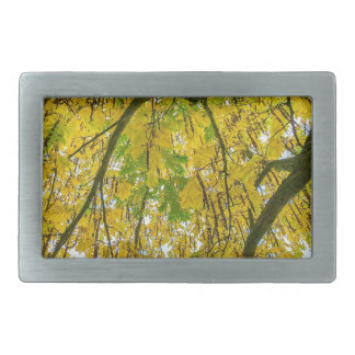 Tree leaves and branches from below in fall rectangular belt buckles