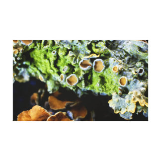Tree Lichen Super Macro photography Canvas Print