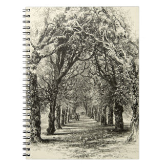 Tree-Lined Avenue Nature Canopy Antique 1800s Note Book