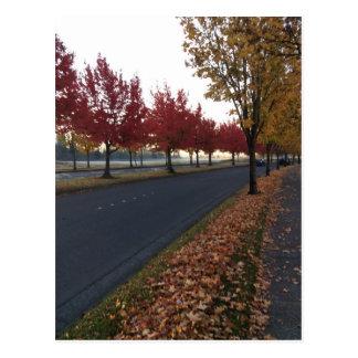 Tree Lined Avenue Postcard