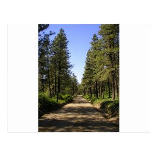 Tree lined dirt road postcard