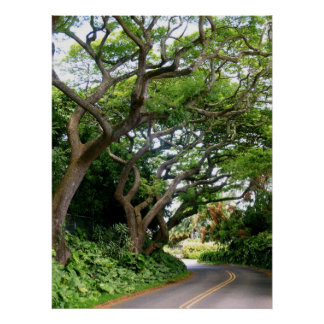 Tree-lined Drive Poster