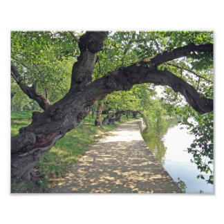 Tree Lined Path by Lakeside Photo