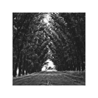 Tree-lined Path Canvas Print