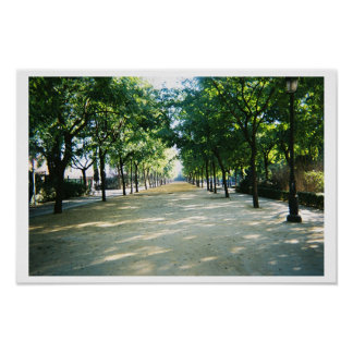 tree lined path poster