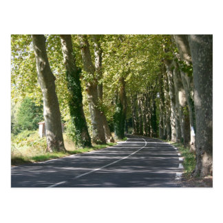 Tree lined road in France Postcard