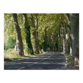 Tree lined road in France Poster