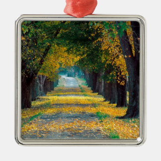 Tree Louisville Roadway Kentucky Silver-Colored Square Ornament
