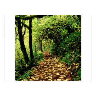 Tree Maple Lined Silver Creek Postcard
