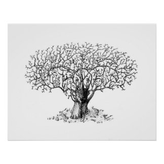 Tree of Life - animals Poster