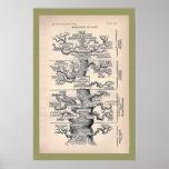 Tree Of Life / Pedigree Of Man Poster
